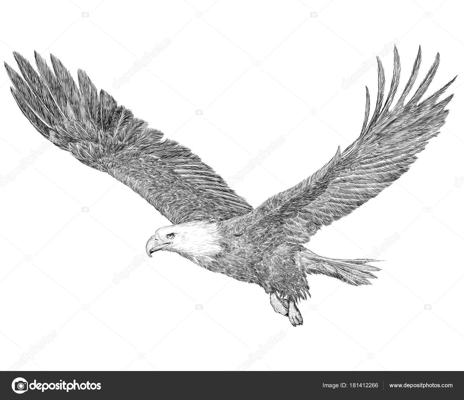 how to draw an eagle flying flying eagle pencil drawing at paintingvalleycom eagle how an flying to draw