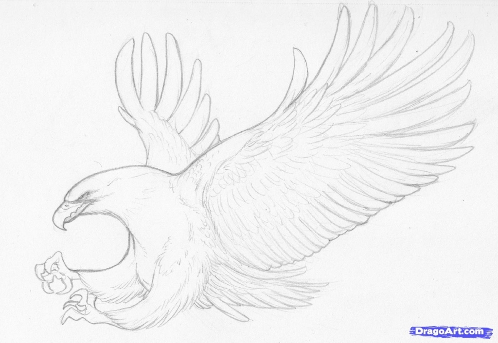 how to draw an eagle flying how to draw a bald eagle flyinghunting video step by to flying how draw an eagle