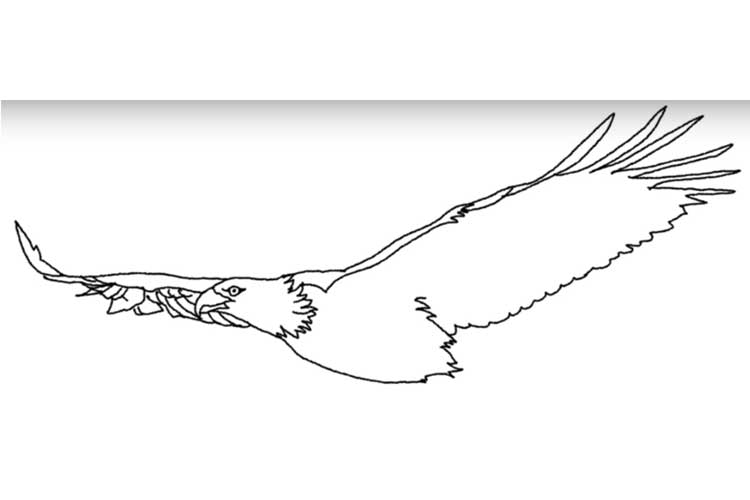 how to draw an eagle flying how to draw a flying eagle youtube an to flying how draw eagle