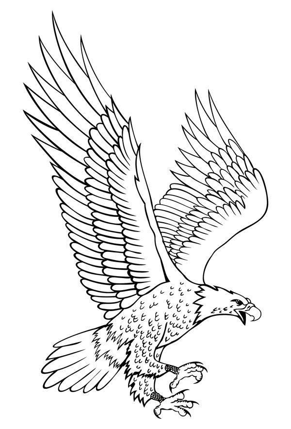 how to draw an eagle flying how to draw an eagle flying how to eagle draw an flying