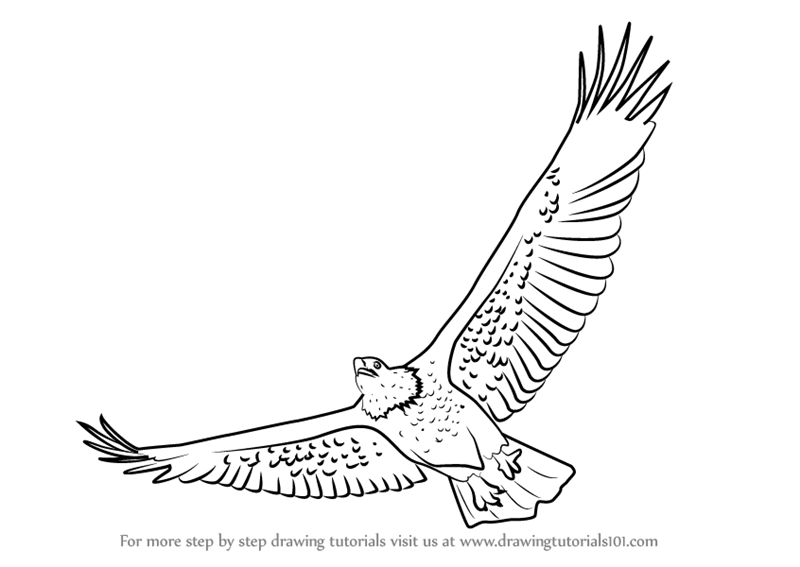 how to draw an eagle flying how to draw an eagle flying realistic head easy and an flying to eagle how draw