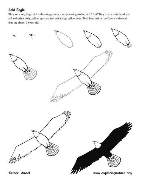 how to draw an eagle flying how to draw an eagle flying realistic head easy and eagle draw flying an to how