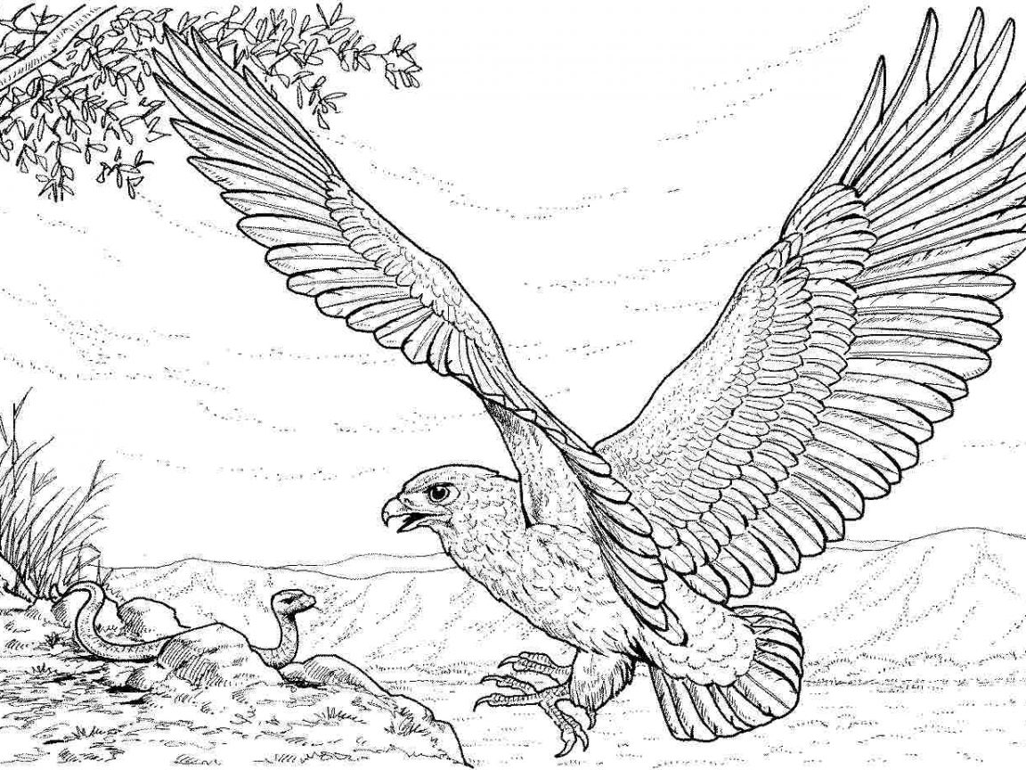 how to draw an eagle flying image result for eagle drawings eagle drawing eagle outline to draw eagle an how flying