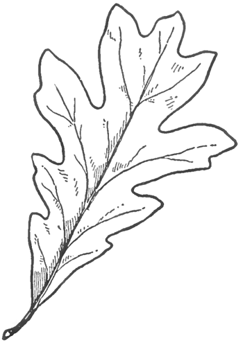 how to draw an oak leaf 1000 images about watercolor oak trees on pinterest an draw oak leaf to how