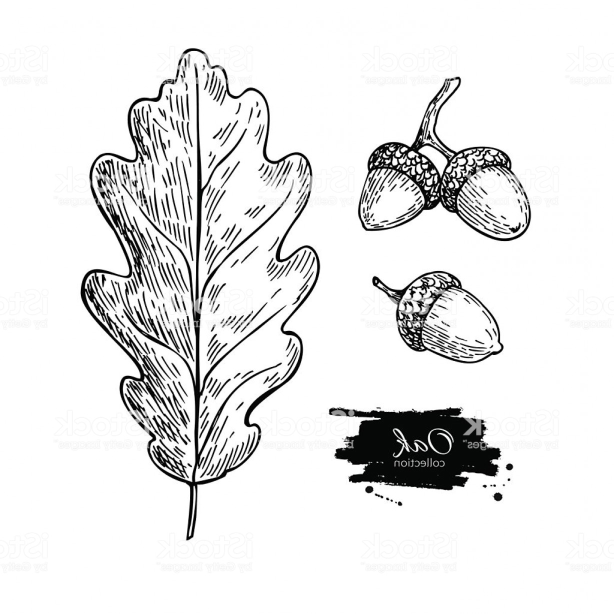 how to draw an oak leaf heraldry oak leaf heraldic free photo simple hand drawn oak how to draw leaf an