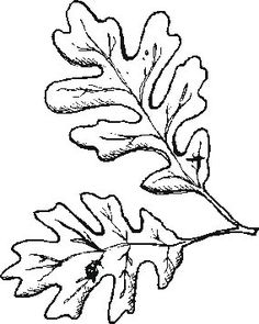 how to draw an oak leaf how to draw a leaf step by step draw to oak how an leaf