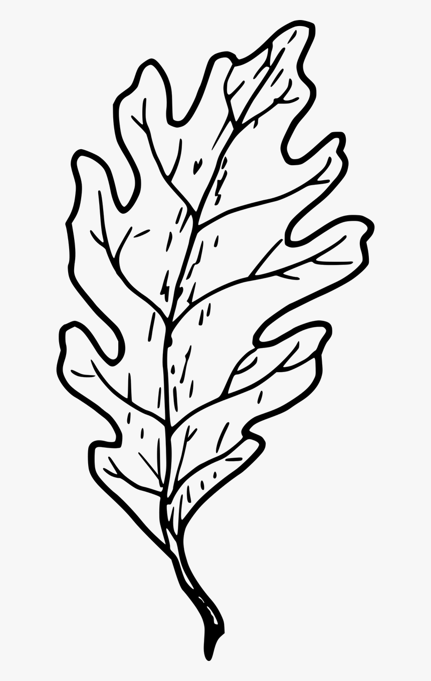 how to draw an oak leaf how to draw oak leaves with step by step drawing lessons to an oak how draw leaf