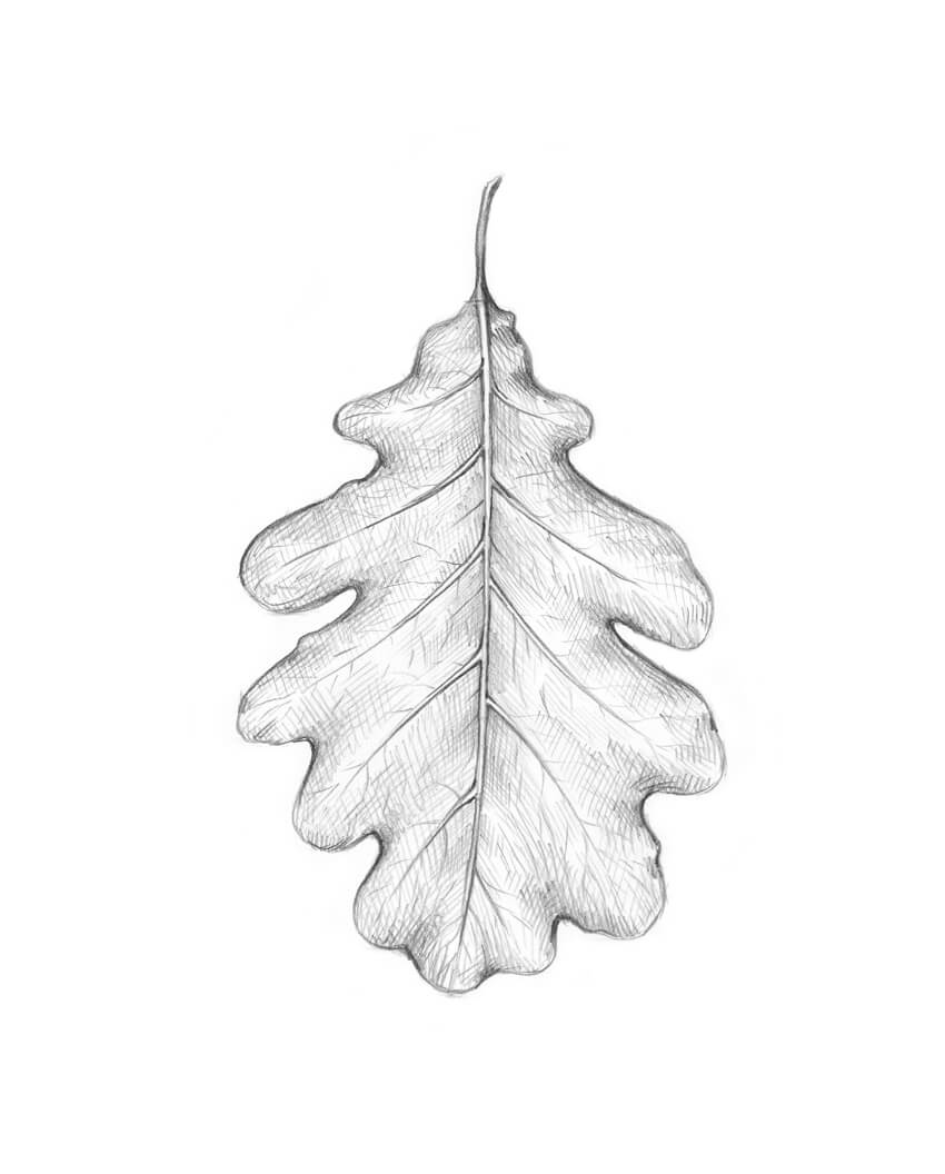 how to draw an oak leaf oak leaf drawing by tina jost oak how to draw leaf an