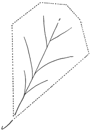 how to draw an oak leaf oak leaves drawing at getdrawings free download an leaf how draw to oak