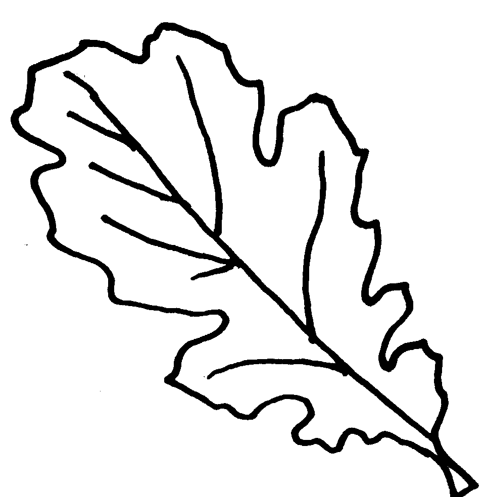 how to draw an oak leaf oak leaves drawing at getdrawings free download how draw leaf oak an to
