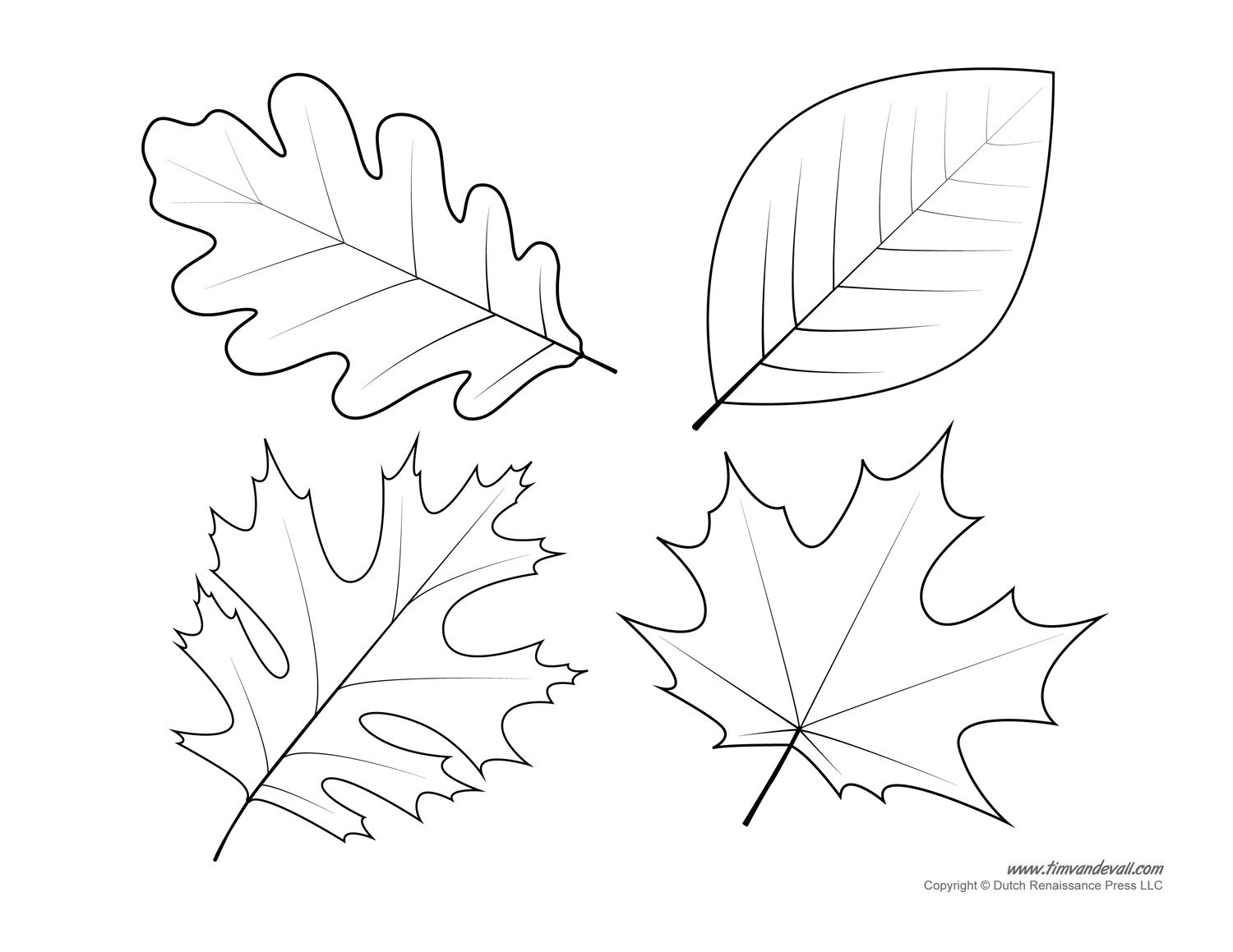 how to draw an oak leaf white oak tree drawing at getdrawings free download draw an to oak how leaf