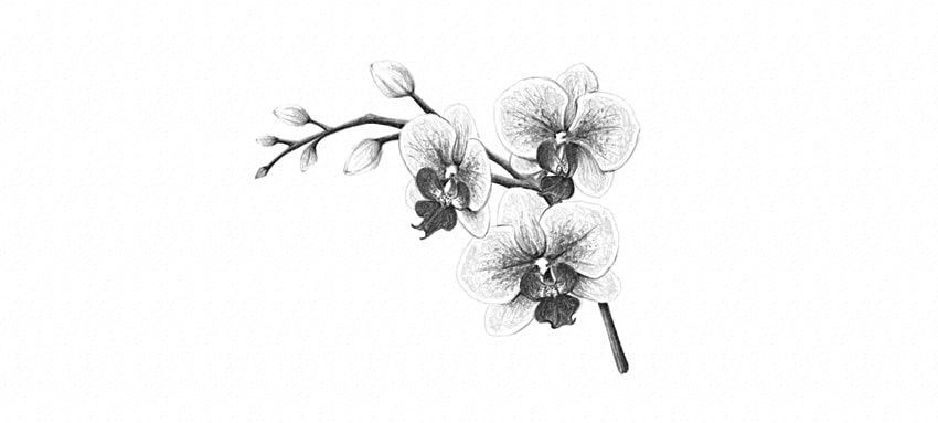 how to draw an orchid flower how to draw an orchid flower orchid to an how flower draw
