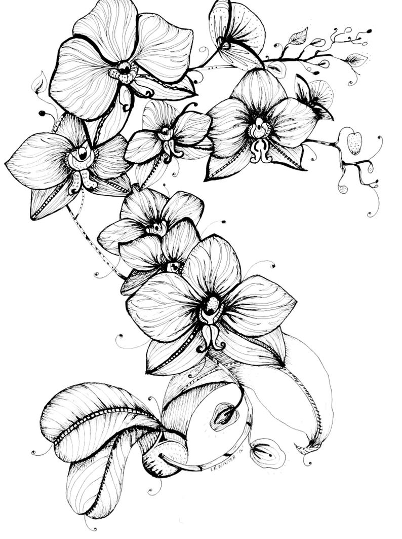 how to draw an orchid flower how to draw an orchid unit 1 pinterest how to draw to orchid flower draw how an