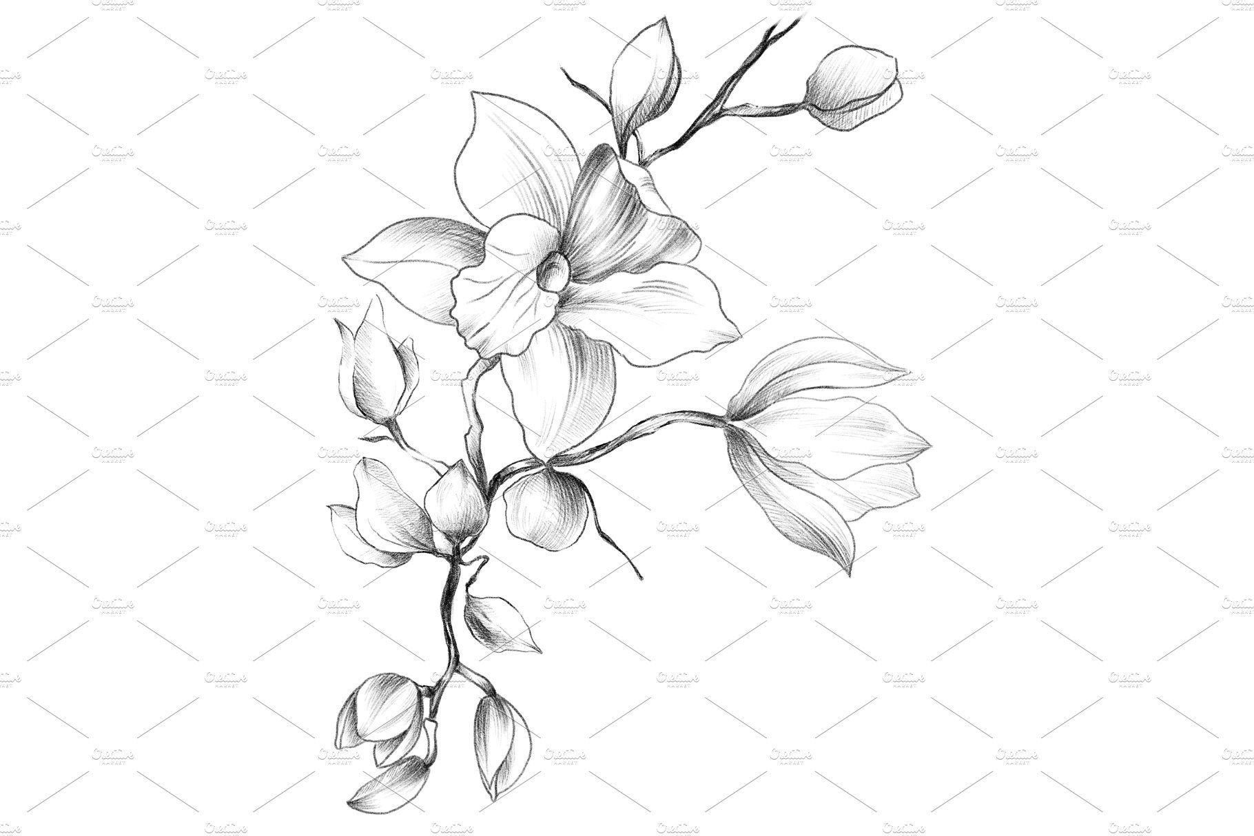 how to draw an orchid flower how to draw orchid design tattoo flowers to orchid flower how draw an