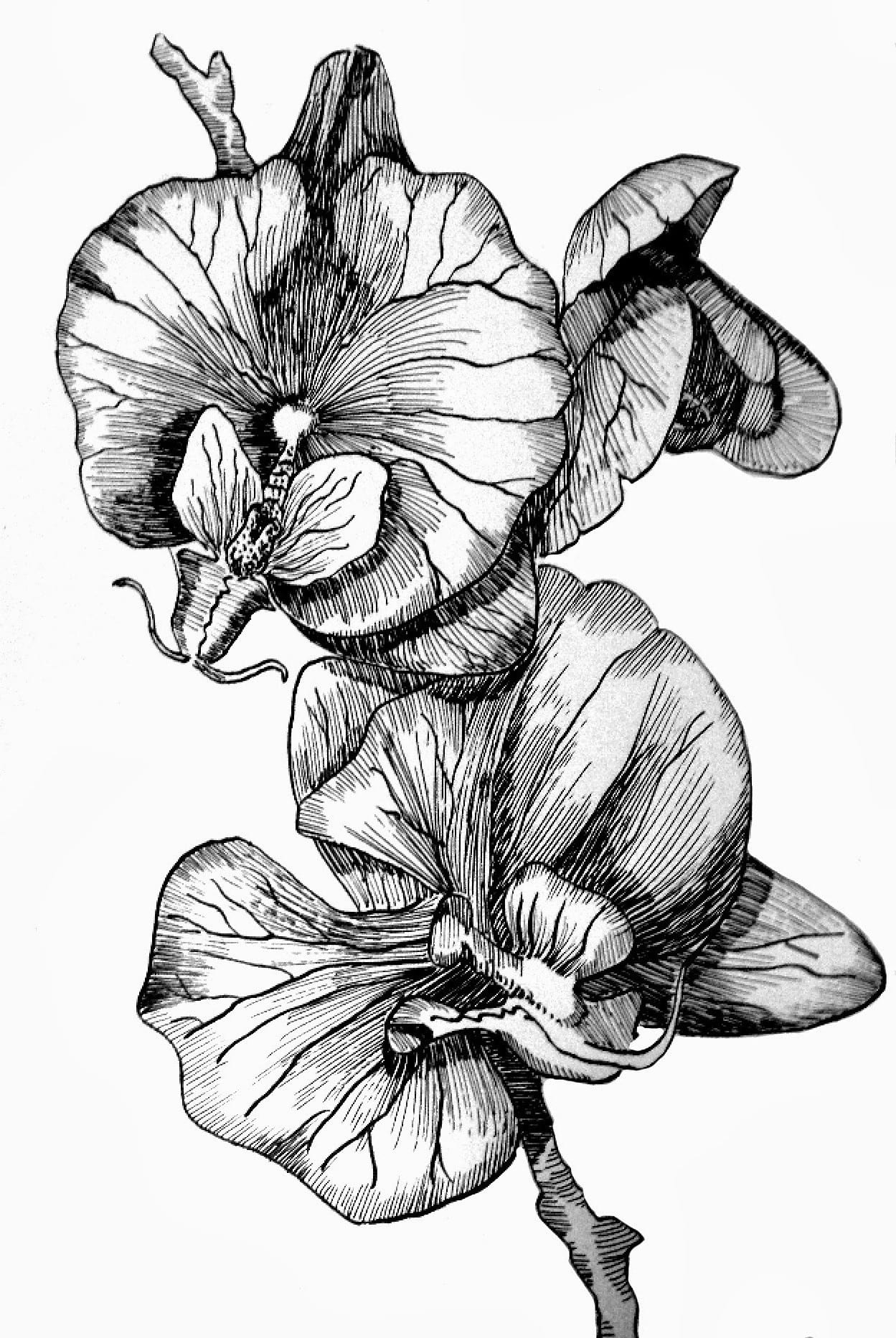 how to draw an orchid flower how to draw simple orchid with images orchid drawing orchid an flower draw how to