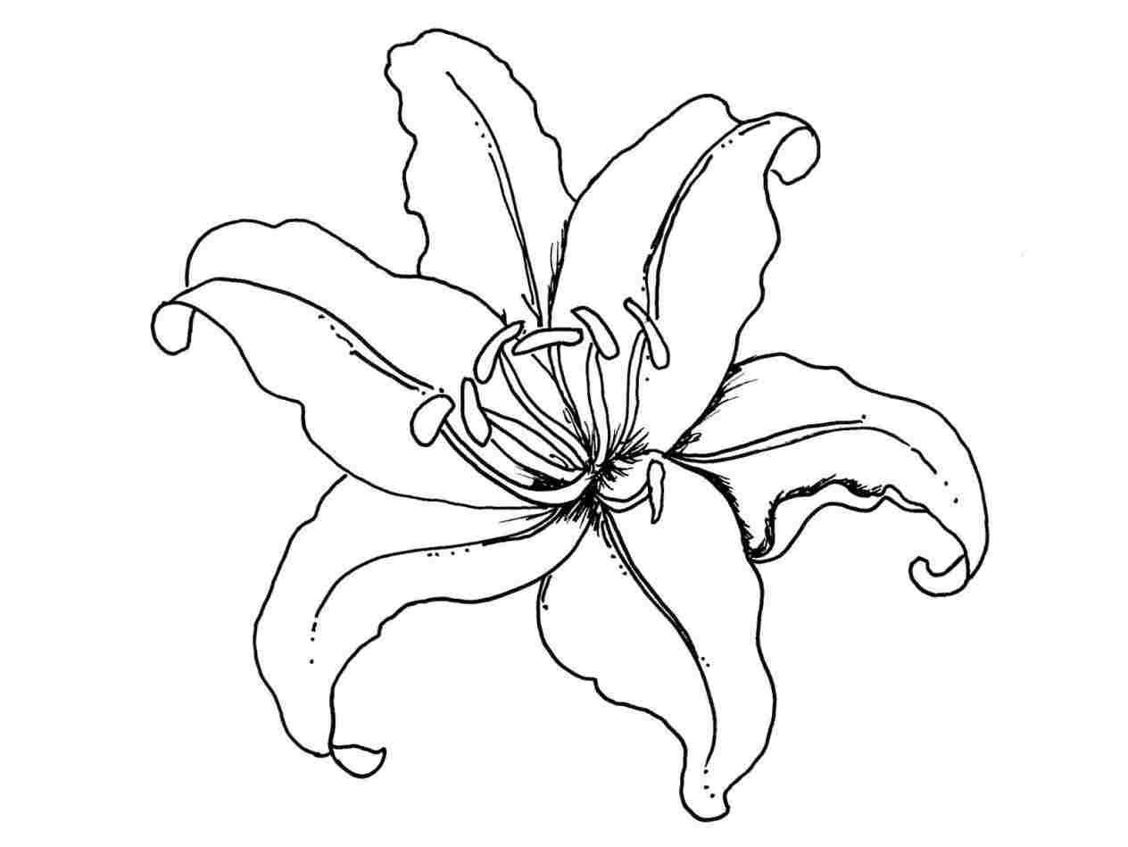 how to draw an orchid flower orchid drawing orchid flowers an draw flower to orchid how