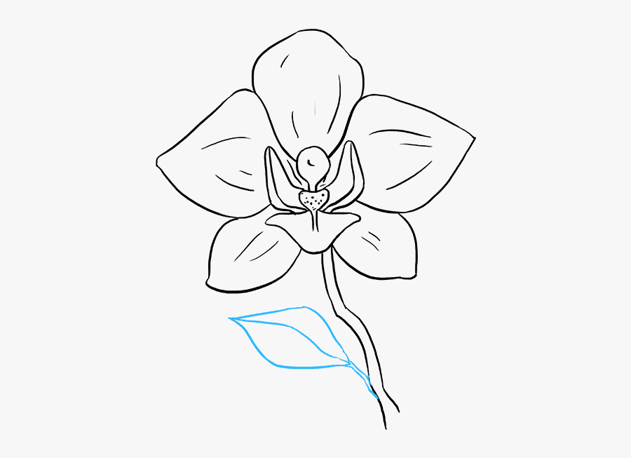 how to draw an orchid flower orchid drawing outline at getdrawings free download to flower draw orchid an how