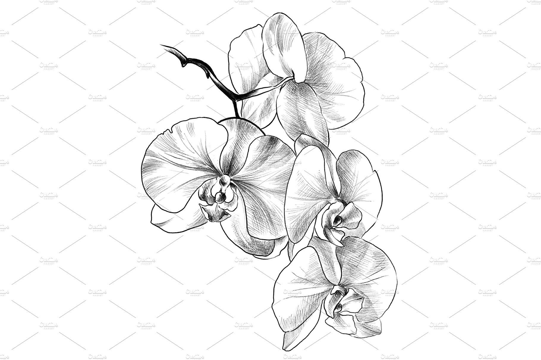 how to draw an orchid flower orchid flower drawing free download on clipartmag flower draw how orchid to an