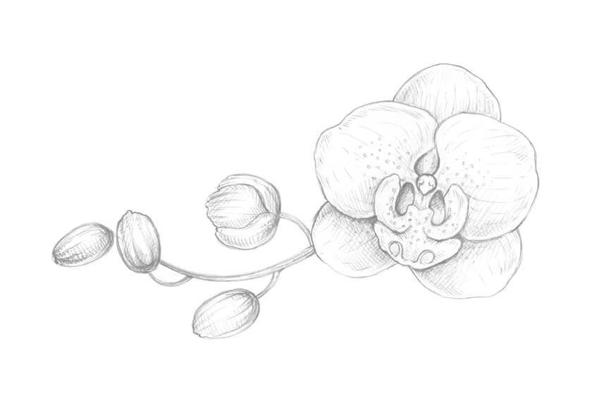 how to draw an orchid flower pencil drawing orchid flowers ad sponsored flowers to flower how an draw orchid
