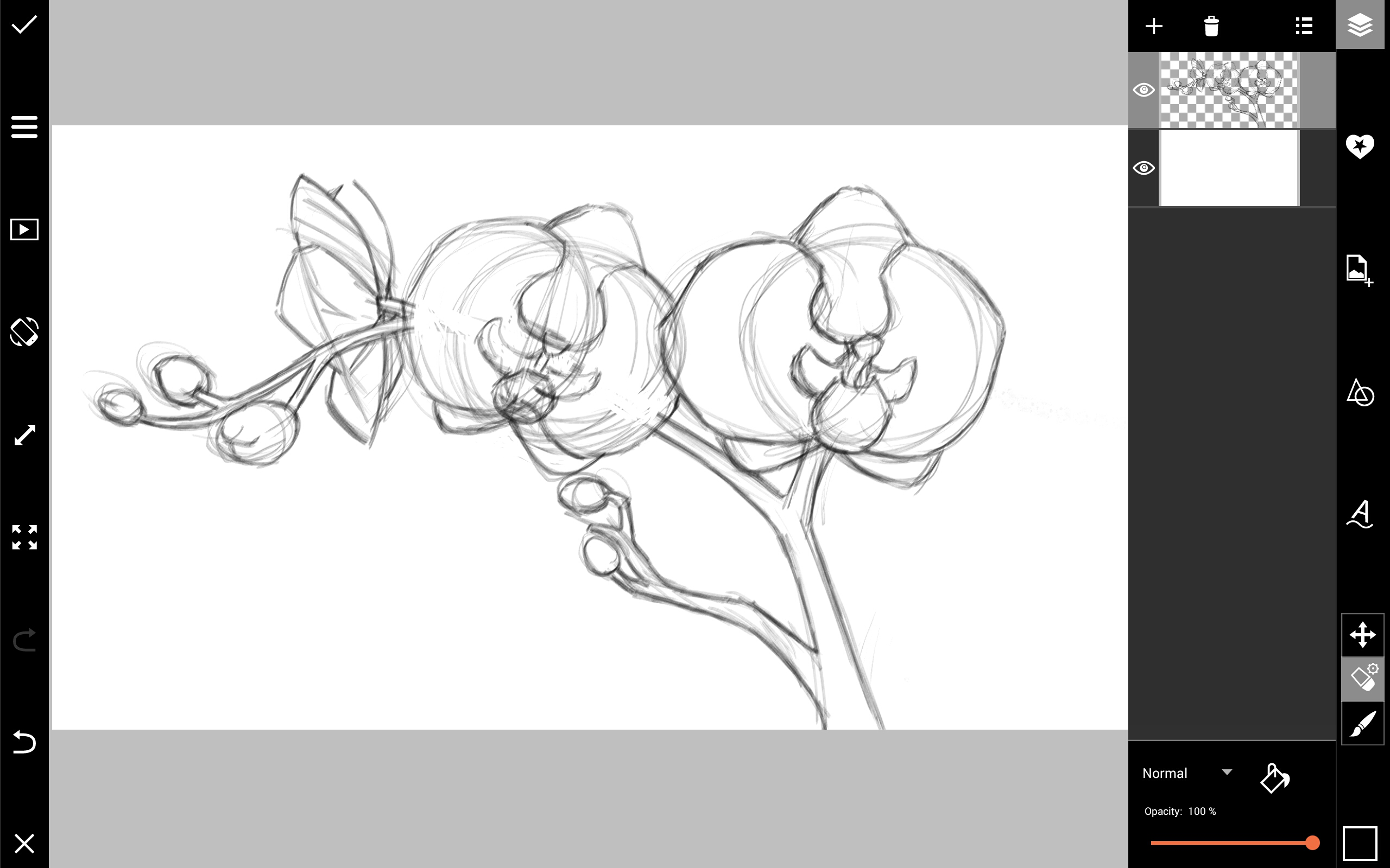 how to draw an orchid flower phalaenopsis orchid care phalaenopsis orchid orchid to orchid an draw how flower