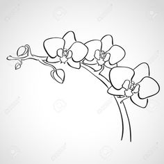 how to draw an orchid flower simple orchid drawing at getdrawings free download orchid how flower an draw to