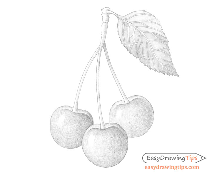 how to draw cherrys draw a bunch of cherry sketch for beginner easy to draw how cherrys to