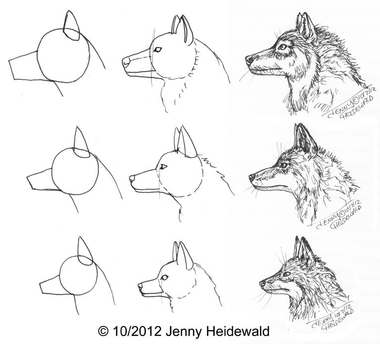 how to draw clawdeen wolf easy wolf drawing step by step pencil at paintingvalleycom wolf easy to clawdeen draw how