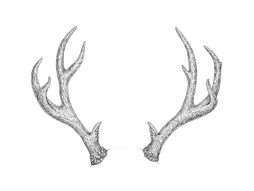 how to draw deer antlers antlers by tea leigh from tattly temporary tattoos draw deer to antlers how