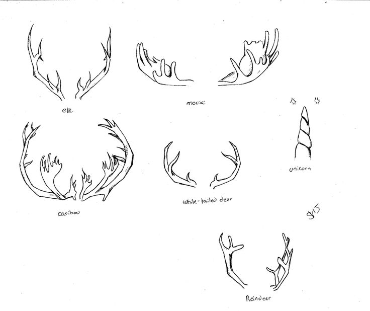 how to draw deer antlers antlers google search antler drawing antler art draw antlers deer how to
