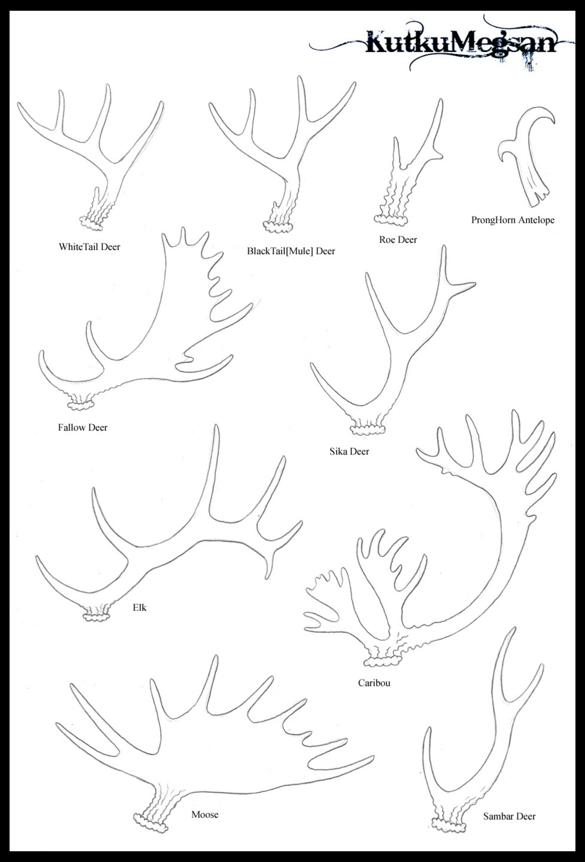 how to draw deer antlers february 8th antlers sketchdaily antlers february 8 draw how antlers deer to