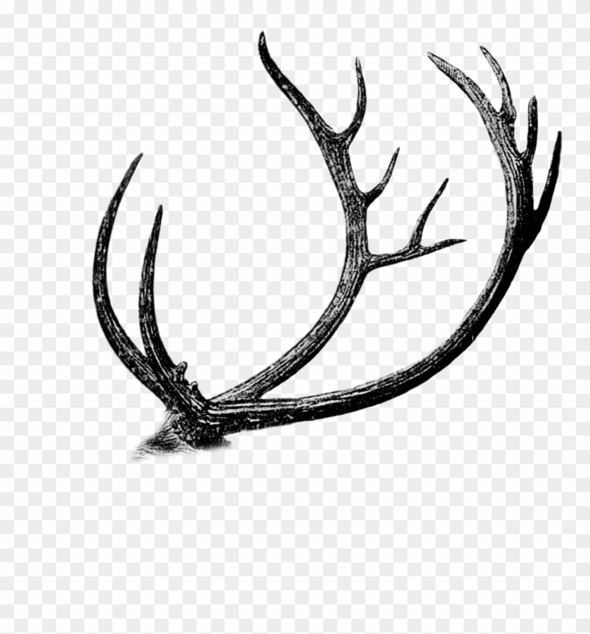 how to draw deer antlers how to draw antlers step by step draw antlers to how deer