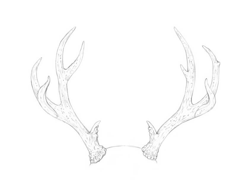 how to draw deer antlers how to draw antlers step by step in 2020 antler drawing deer draw antlers to how