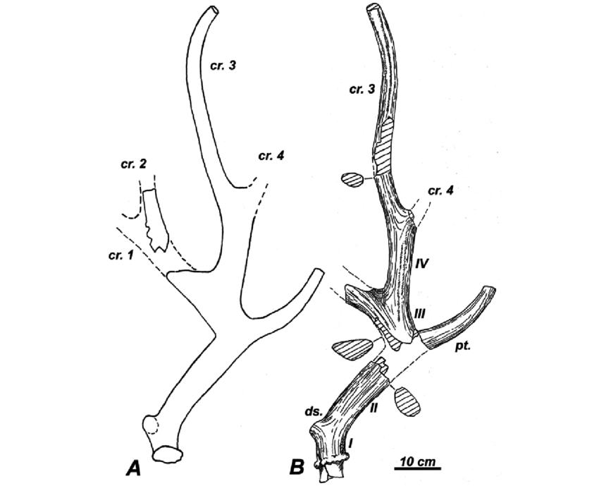how to draw deer antlers pin by banana hanhan on to print in 2020 deer drawing how to draw antlers deer