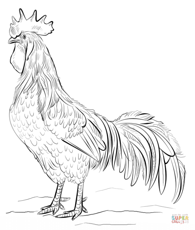 how to draw hen step by step drawing realistic birds step by step how to draw a chick to step how by step draw hen