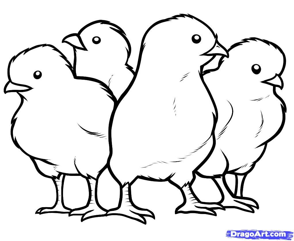 how to draw hen step by step how to draw a chicken and a rooster step how step to draw hen by