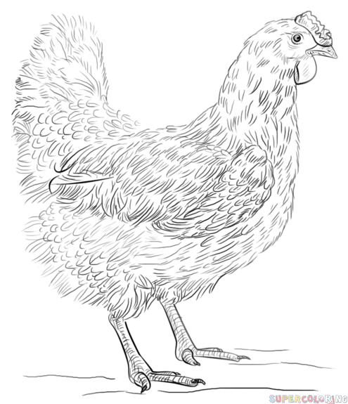 how to draw hen step by step how to draw a hen step by step drawing tutorials for kids step draw to step hen by how