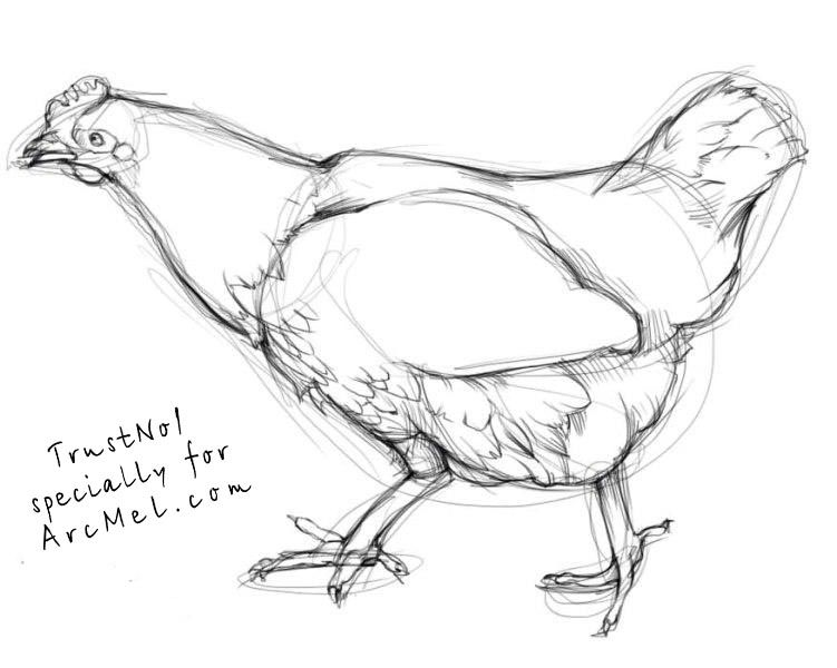 how to draw hen step by step how to draw chickens drawing tutorials drawing how draw by step how hen to step