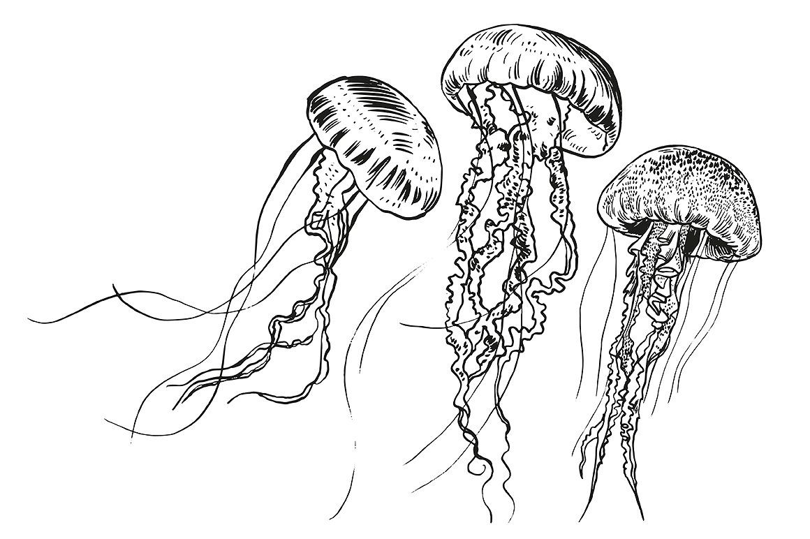 how to draw jellyfish how to draw a jelly fish draw central jellyfish draw how to