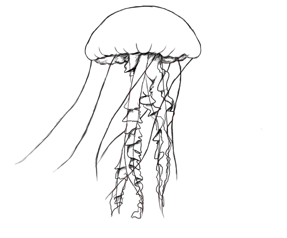 how to draw jellyfish how to draw a jellyfish step by step drawing tutorials draw how jellyfish to