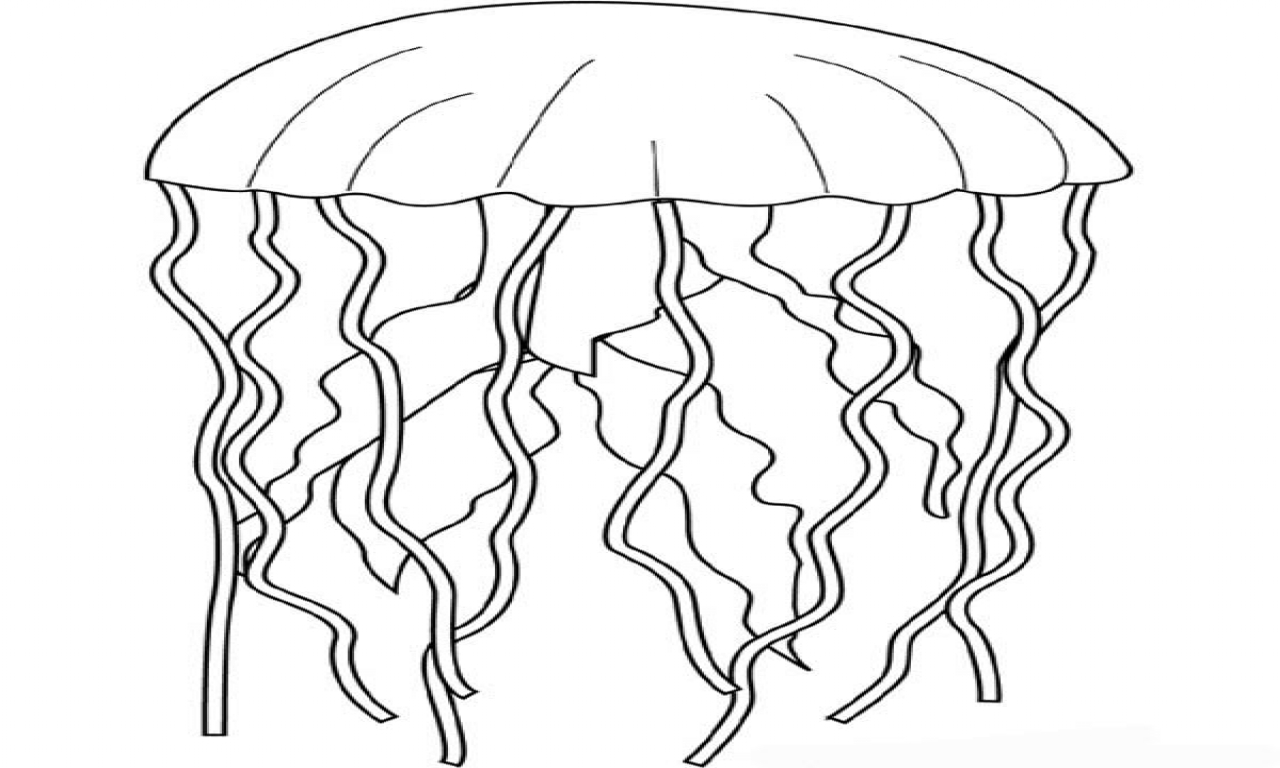 how to draw jellyfish how to draw a jellyfish step by step part 3 easy animals draw to jellyfish how