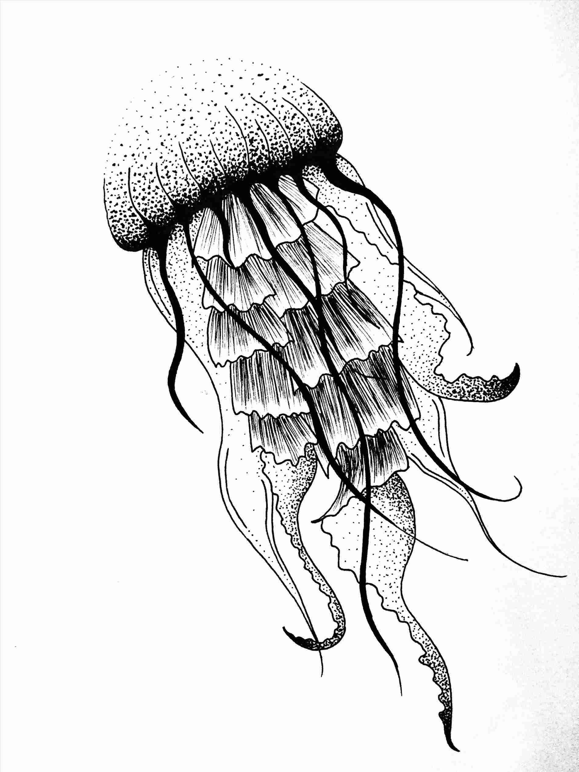 how to draw jellyfish jellyfish drawing made by linda den hollander kwallen jellyfish how draw to