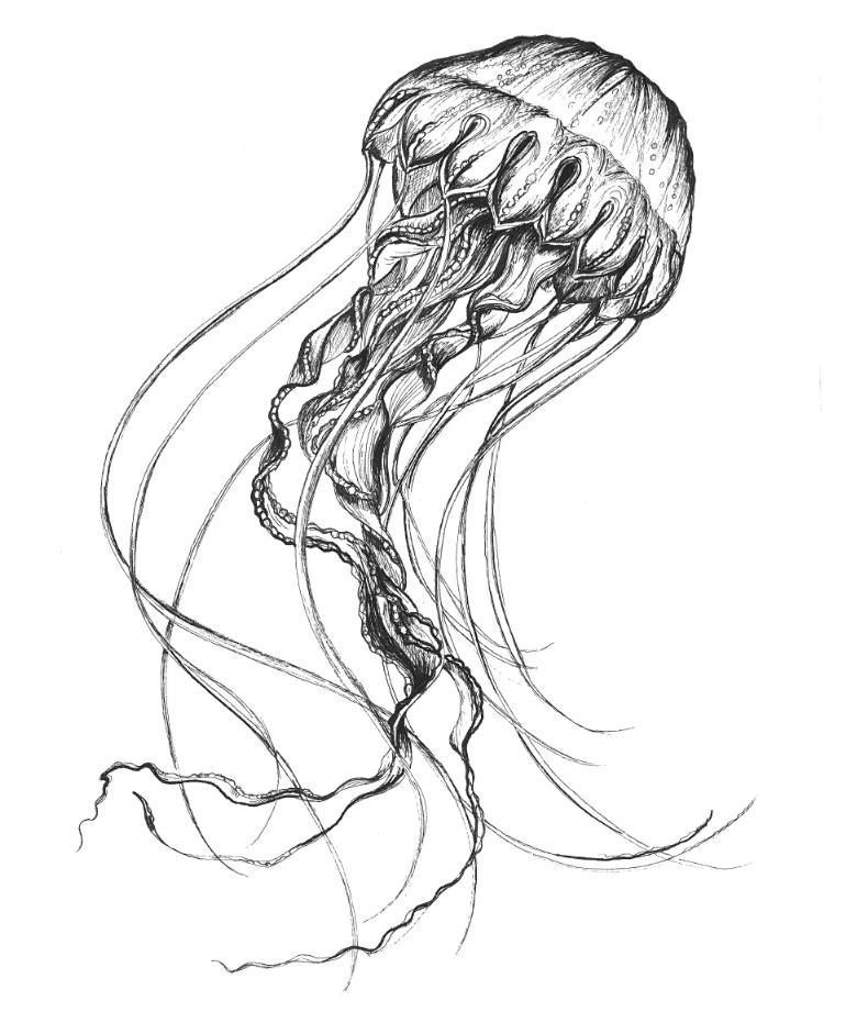 how to draw jellyfish jellyfish sketch at paintingvalleycom explore to how draw jellyfish