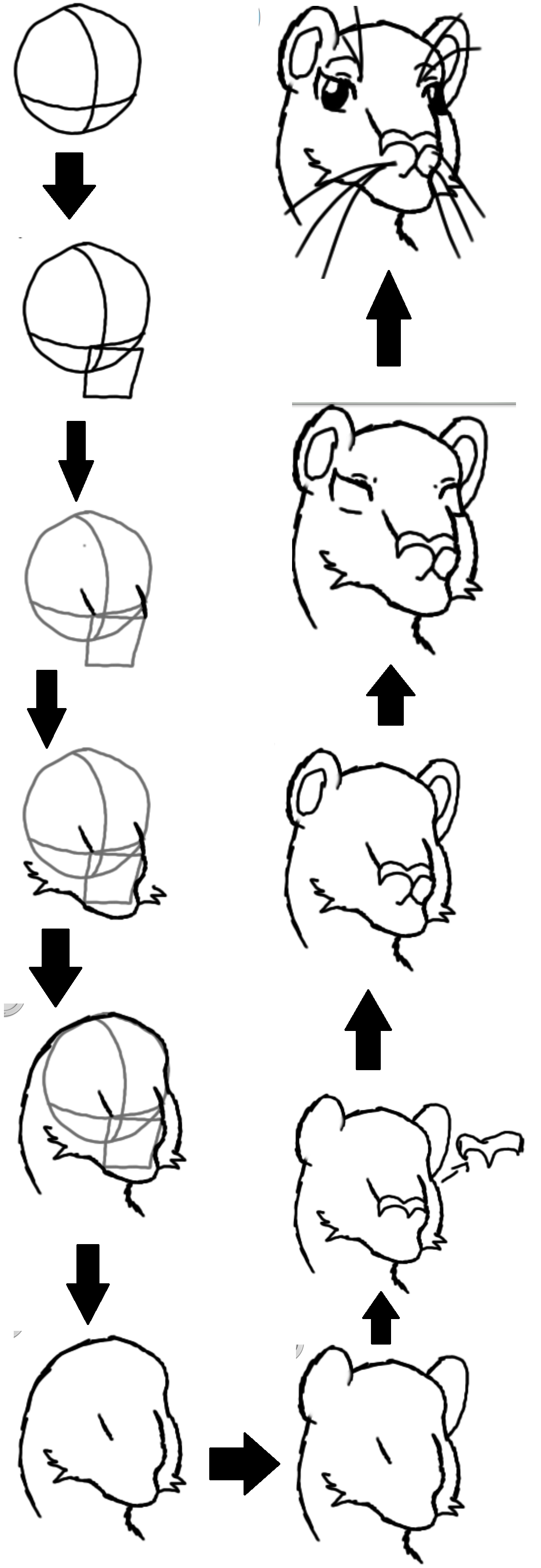 how to draw lion cartoon lion sketch for kids at paintingvalleycom explore cartoon draw to how lion