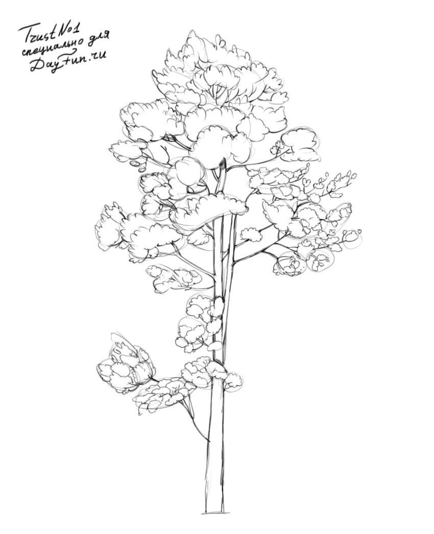 how to draw pine trees step by step 17 best images about trees on pinterest trees a tree pine how trees step by step draw to