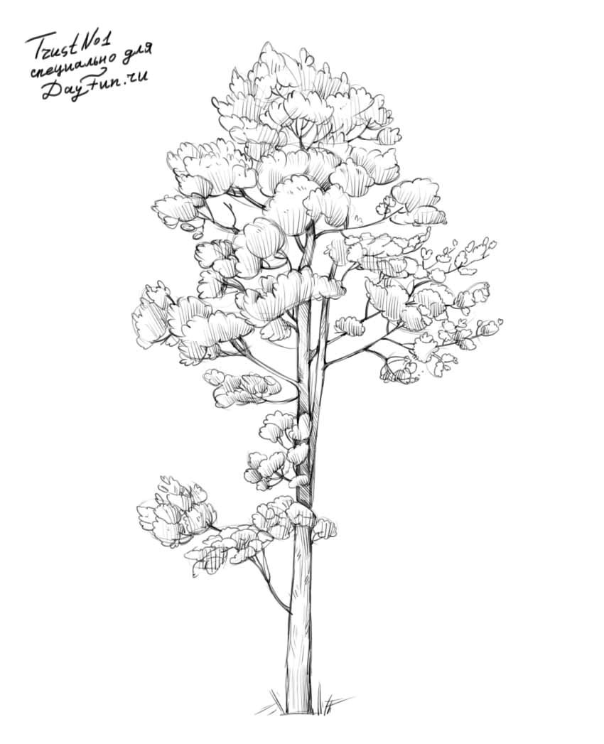 how to draw pine trees step by step 29 trendy ideas for tattoo tree heart simple tattoo step how pine draw step trees by to