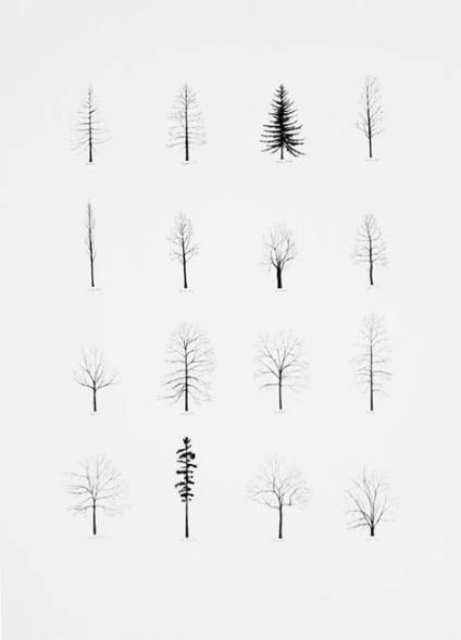 how to draw pine trees step by step hemlock tree illustration google search tree drawing step draw step how to trees by pine