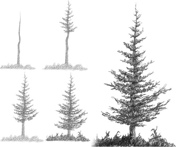how to draw pine trees step by step how to draw a tree step by step image guides how to draw trees step step by pine