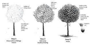 how to draw pine trees step by step how to draw pine trees step by step how step trees draw pine to step by