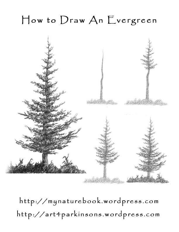how to draw pine trees step by step how to draw trees drawing realistic trees in simple step trees step pine to by draw how