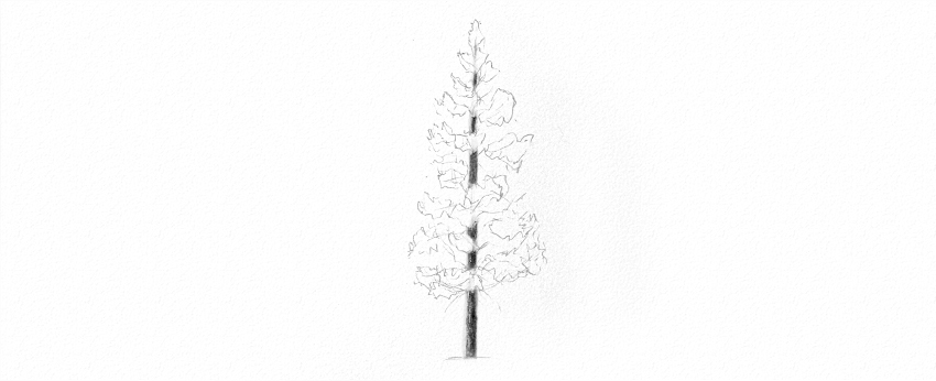 how to draw pine trees step by step simple pine tree drawing at getdrawings free download draw to step pine how by trees step